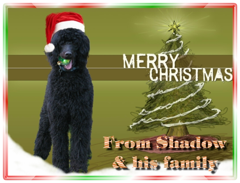 Name:  shadow-christmas-card-3.jpg