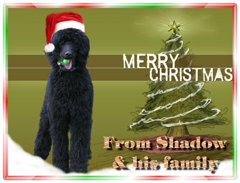 Name:  shadow-christmas-card-3.jpg Views: 548 Size:  291.5 KB